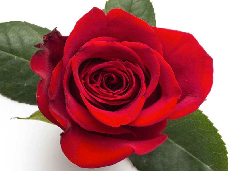 marmellata petali rosa ricetta